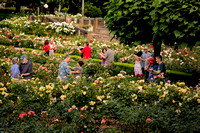 Waltzing in the Rose Gardens